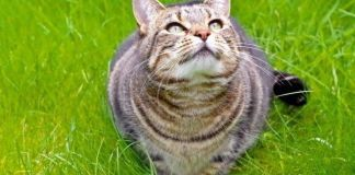 Признаки глистной инвазии у котят