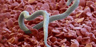 Вопрос №10 – Какие существуют эффективные методы лечения дирофиляриоза?
