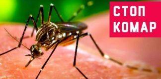 Защита периметра на даче от комаров