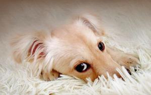 Признаки глистов у собак