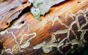 Кто они вредители древесины?