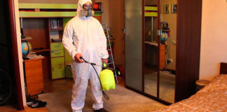 Как избавляться от блох в доме
