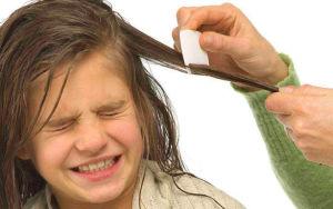 Использование традиционных средств для борьбы со вшами