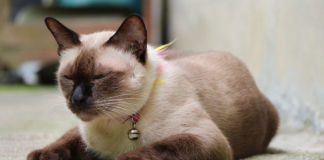 Вопрос №23 – Откуда у домашней кошки могут появиться глисты?