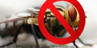 Эффективные средства защиты от нашествия мух