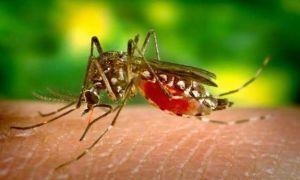 В чем опасность укуса малярийного комара