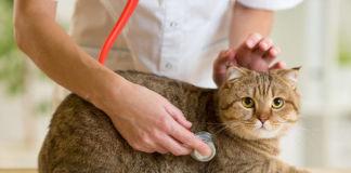 Признаки глистной инвазии у кошки