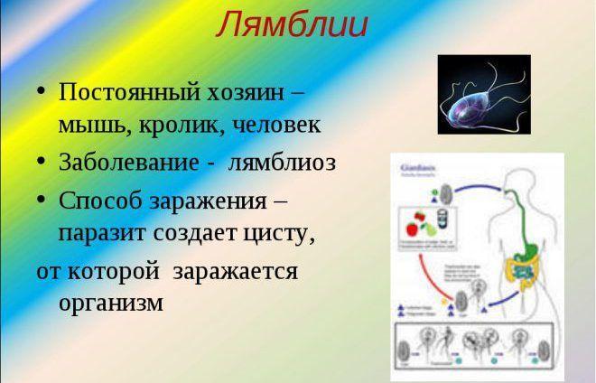 Паразитарное заболевание лямблиоз