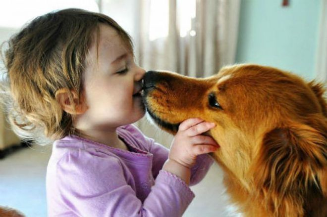 Передача аскарид от животных к человеку