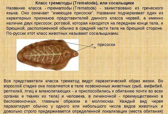 Трематоды
