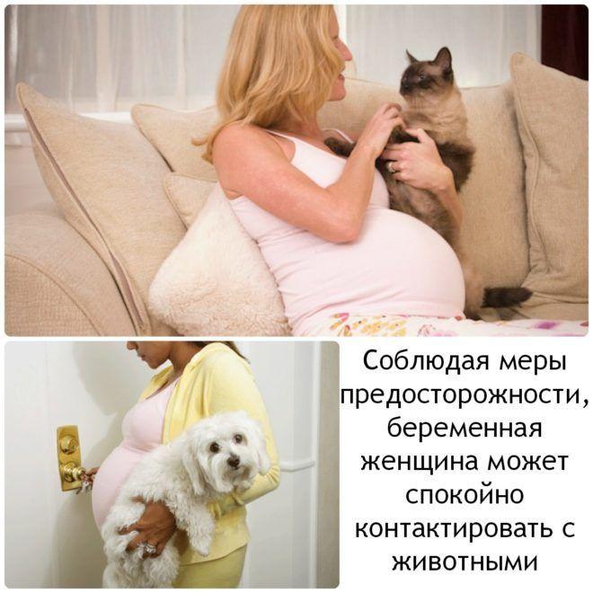 Беременность и паразиты