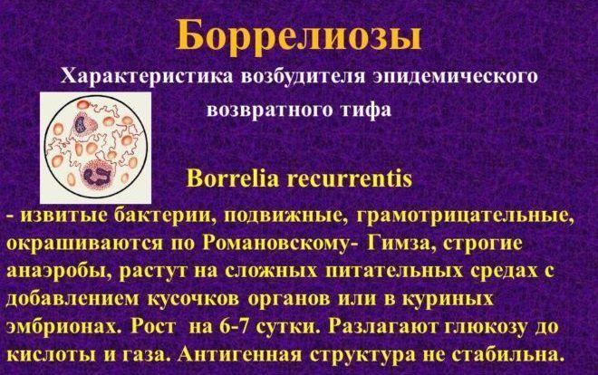 Боррелиозы