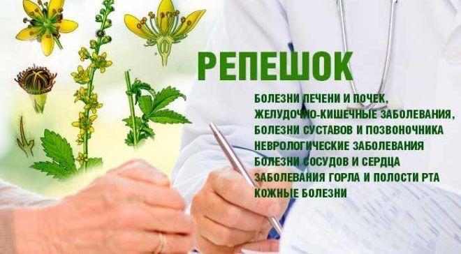 Что лечит репешок лечебные свойства .