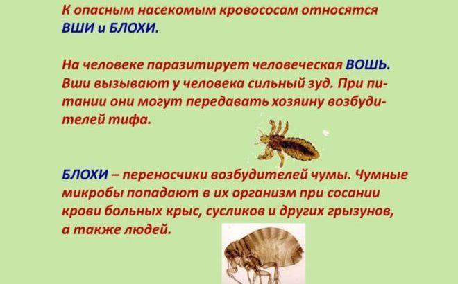К опасным насекомым кровососам относятся ВШИ и БЛОХИ