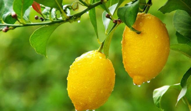 Лимон от глистов.jpg