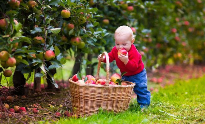 От немытых фруктов