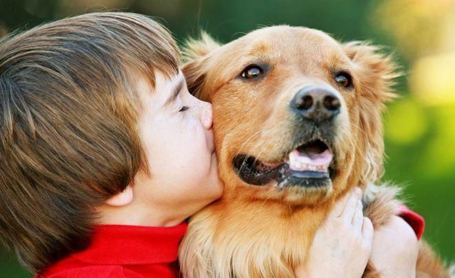 После контакта с домашними животными