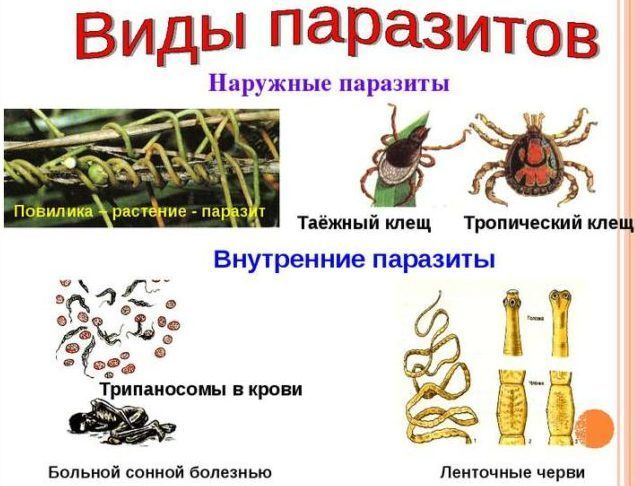 Виды паразитов в человеке