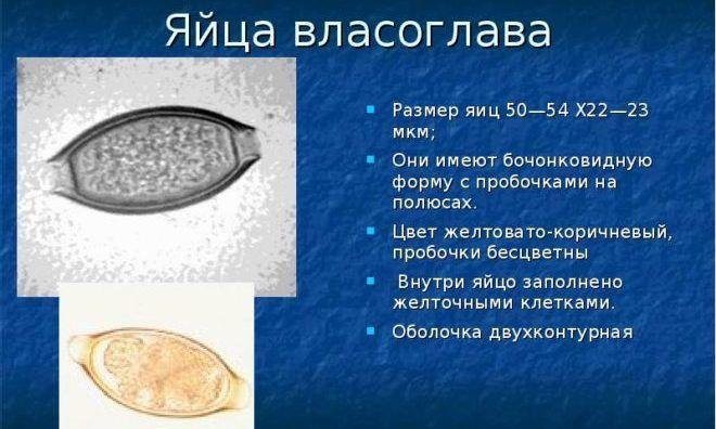 Яйца паразита