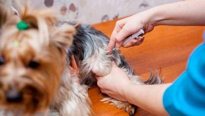 Дегельминтизация животных