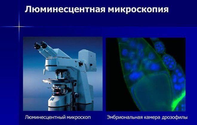 Люминисцентная микроскопия;