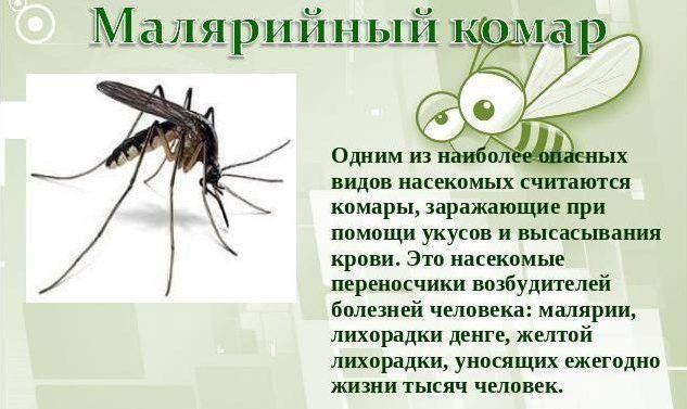 Комар малярийный