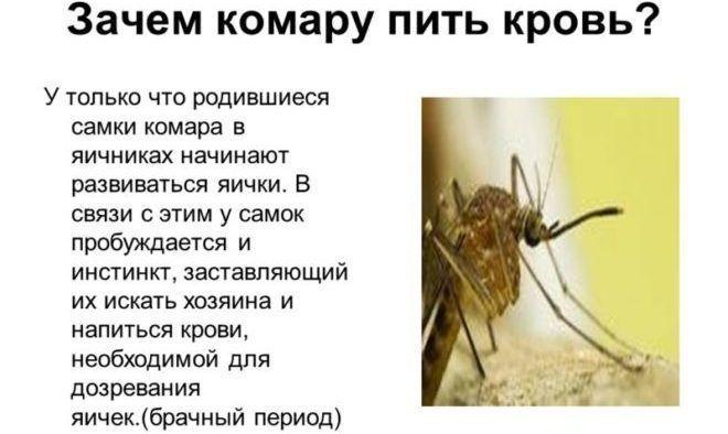 Кровь пьют самки комаров