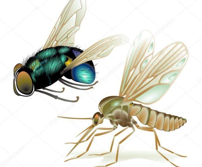 Мухи и комары