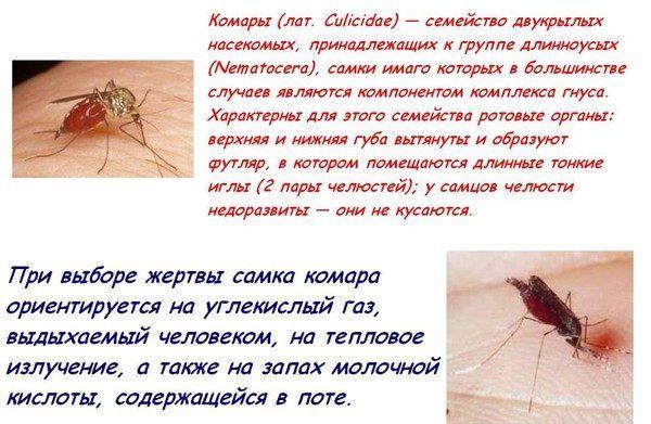 Особенности комаров