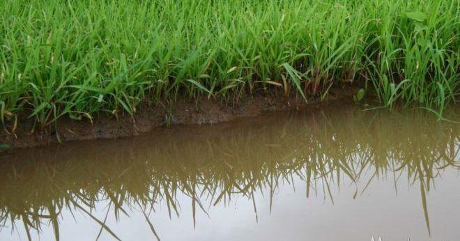 Речная вода
